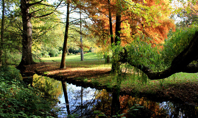 Autumn in London - Bushy park