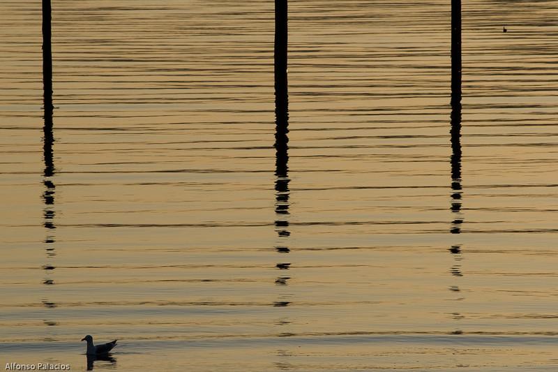 20080412 Orcas Island 252