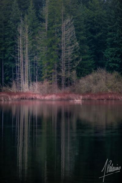 Reflection at Yellow Lake