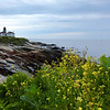 Beavertail floral View