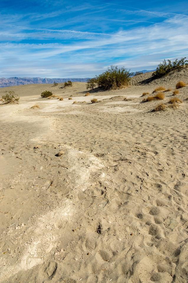 Mesquite Flats