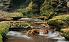 Adams Falls (5)