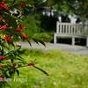 Ridgeberry-12