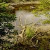 River Wear walk, Fatfield to Fatfield