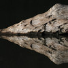 Reflections, Black Swamp