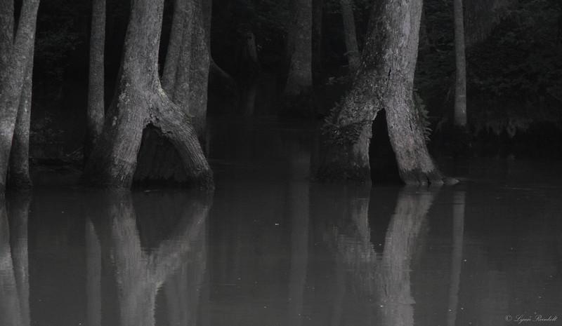 Cache River, Arkansas