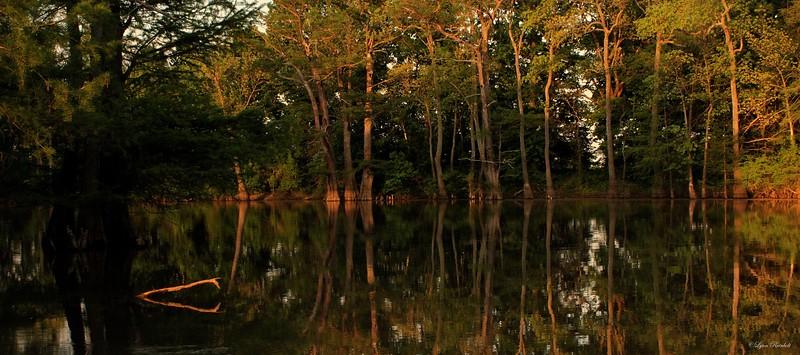 Elbow Slough, White County, Arkansas