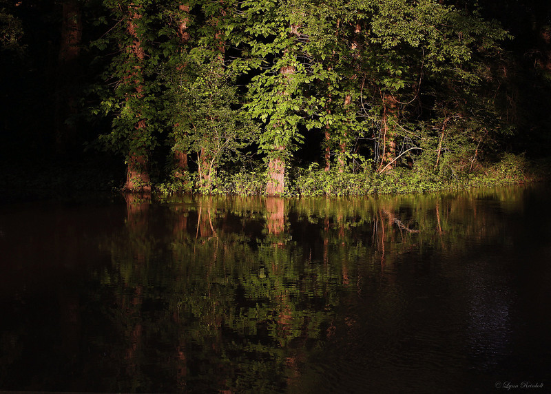 Black Swamp, Arkansas - I took this picture as the sun was setting in the swamp, the swamp was dark and as I turned the corner the sun was shinning through a hole in the canopy. The back light created a small island of light which reflected on the water.