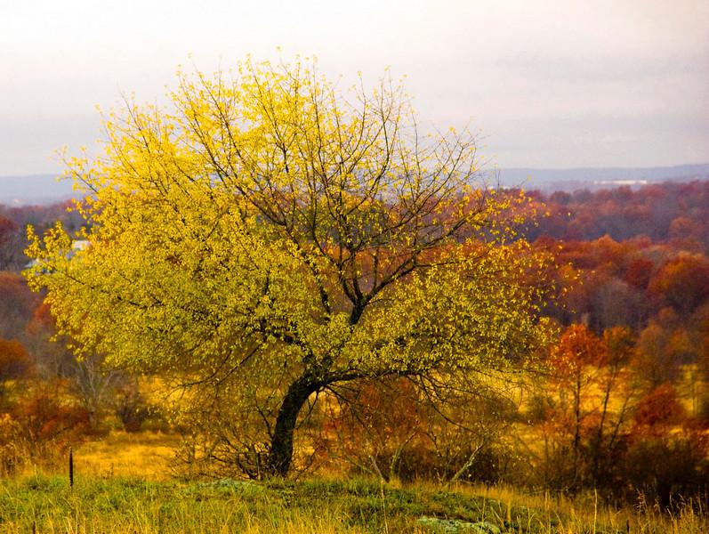 (215 of 238)-Edit cherry tree in fall sarahwells trail rd rz