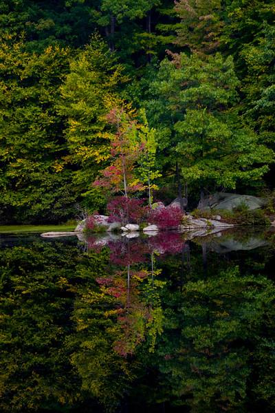 Its only just begun - a splash of color arrives on the pond