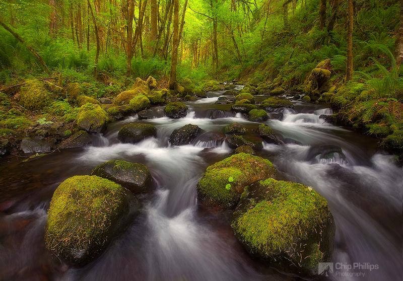 """Gorton Creek Afternoon"""