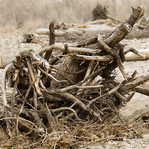 Drift Wood at Two Moon Park