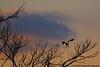 eagle-enhanced sunset<br /> Potomac River<br /> Fairfax County, Virginia<br /> February 2009