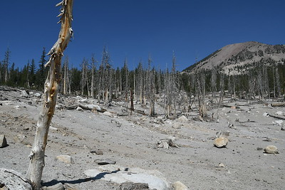 Trees are all poisoned by the ground releasing Carbon Dioxide due to Volcanic issues