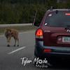 240  G Bison Calf on Road