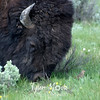 474  G Bison and Bird