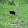 507  G Black Bear Near Tower