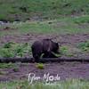 687  G Black Bear