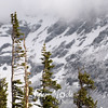1241  G Snowy Mountains and Trees Close