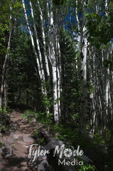 1925  G Aspens and Trail V