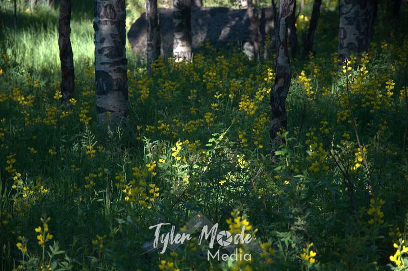1806  G Yellow Flowers and Trees Wide