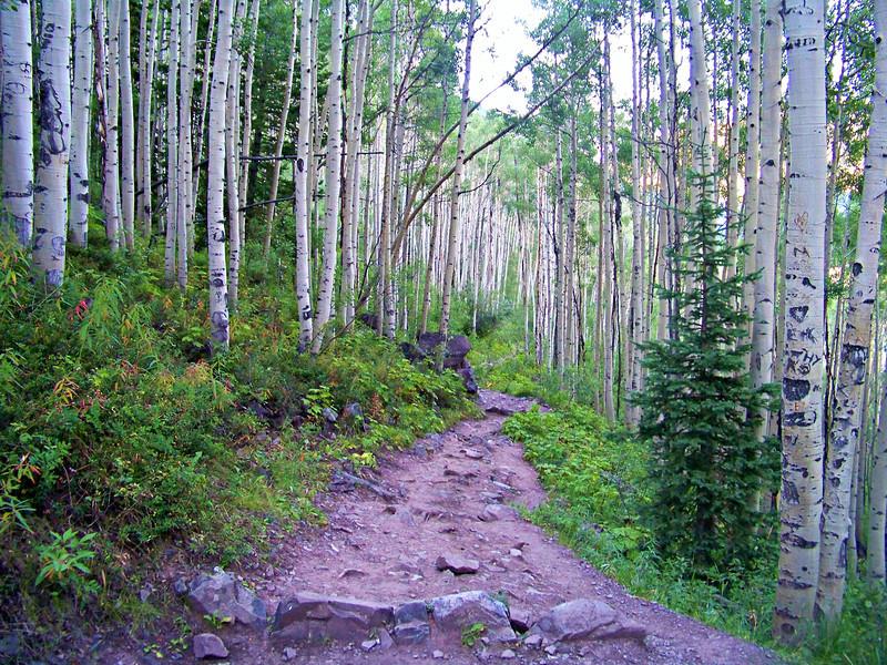The Maroon Creek trail winds through an aspen forest, Colorado Elk Range