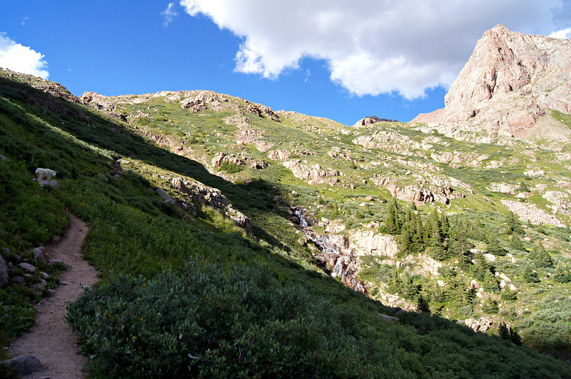 A Mountain Goat stands watch along the trail above Chicago Basin; Colorado San Juans.