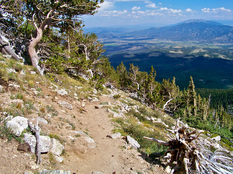 A grove of ancient Bristlecone Pines (some may be over 2000 years old!) thrives at the treeline, 12,200 ft., on Mt. Shavano