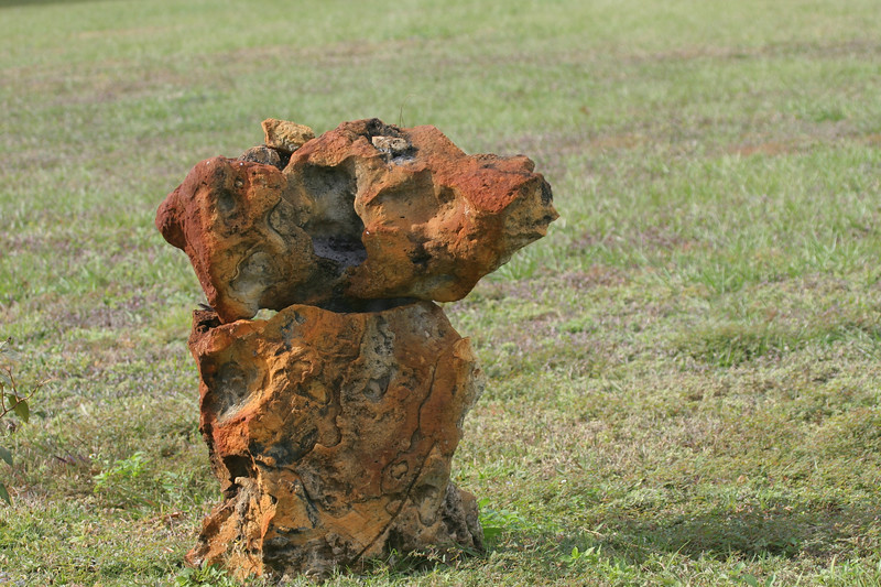 Natural limestone rock showing iron deposits looks like a dog standing in a yard.