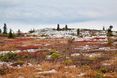 Dolly Sods, WV (IMG_0601)