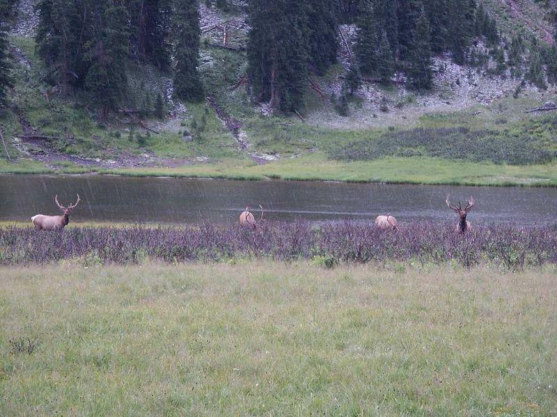elk boys2