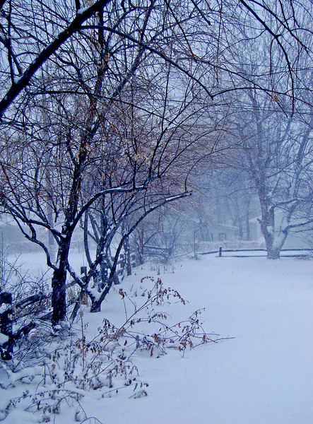 Foggy, cold morning, Littleton, Colorado