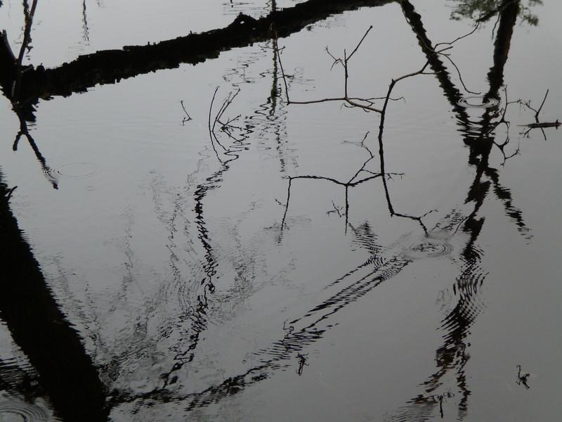 Reflections Front and Center.  Assabet River Nat'l Wildlife Refuge, Maynard, MA