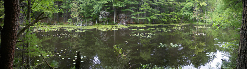 Honey Brook, Maynard, MA, a protected area by the site of the old sawmill.  September '10.