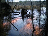 The local swamp, Nov '10