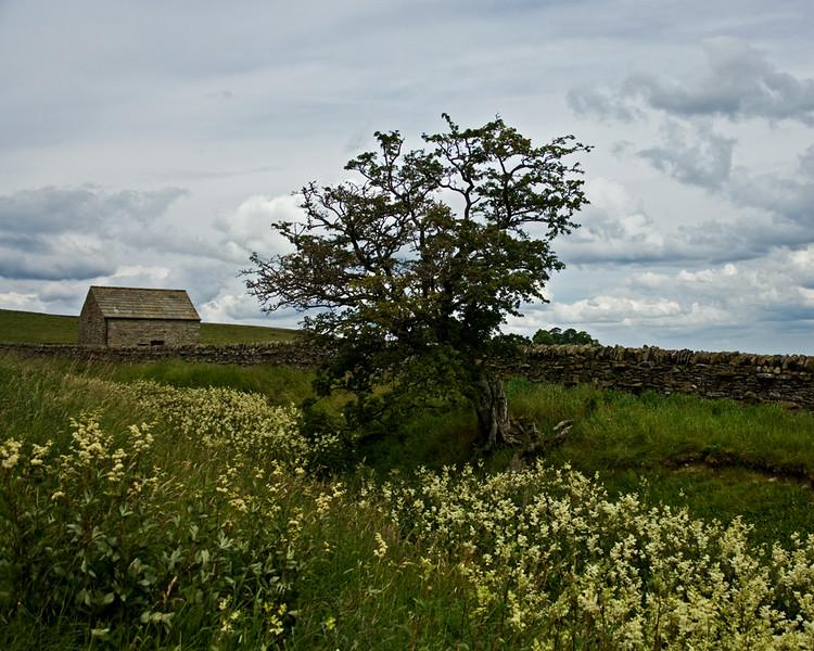 Hannah's Meadow.