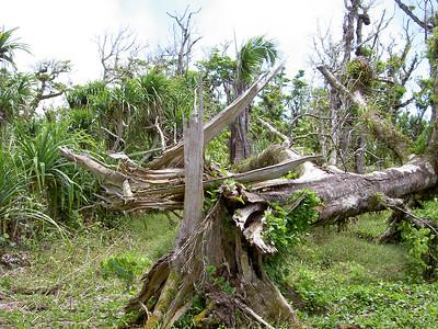 Typhoon damage on Sabaña, Rota, CNMI