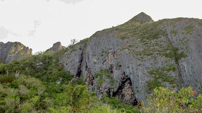 Clif forest, Saipan, CNMI