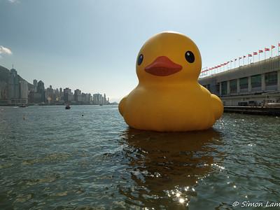 Rubber Duck in HK Harbour