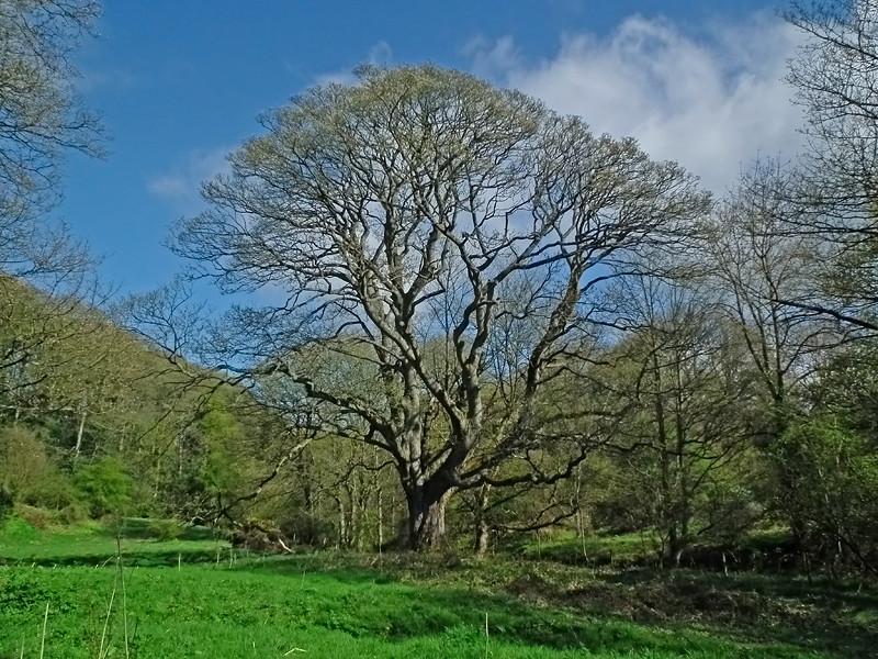 A tree in Weardale