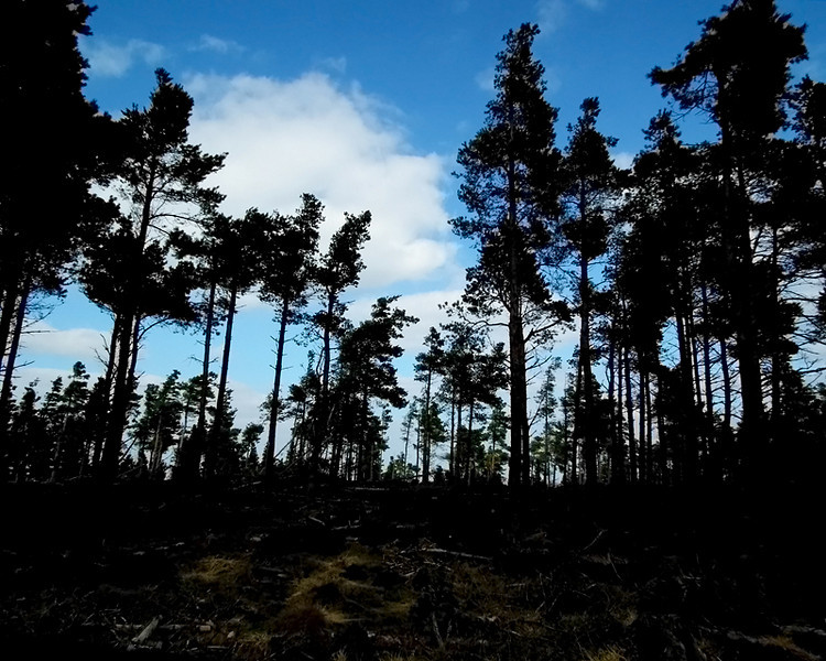 Simonside forest, Rothbury