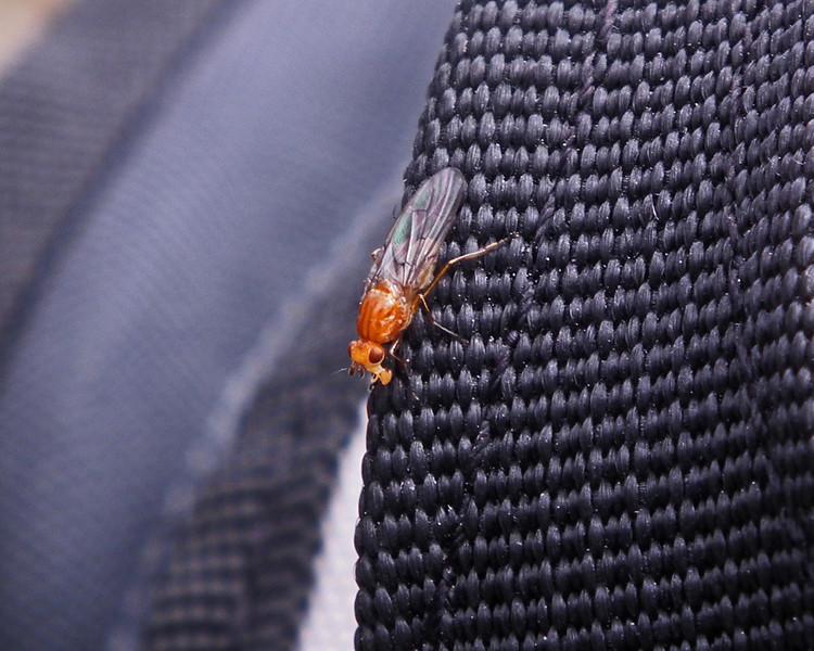 Some kind of bug