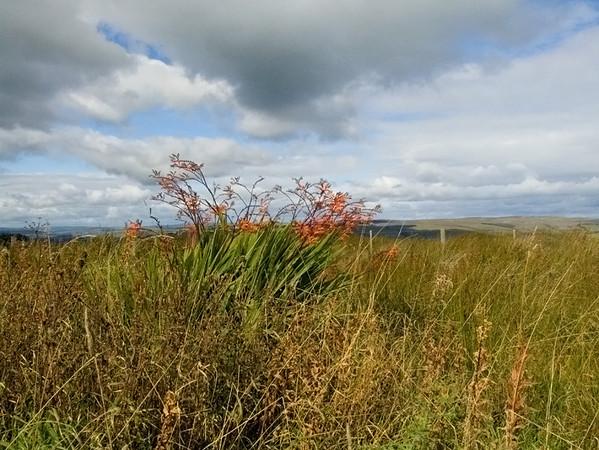 orange flowers in Northumberland