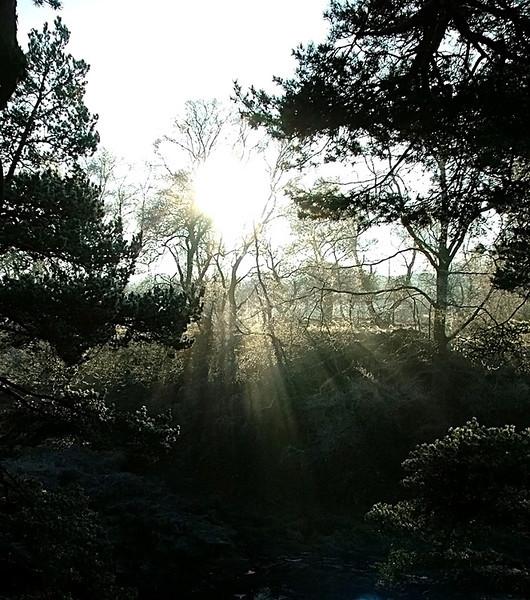 lightbeams through the trees