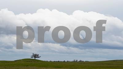 Lone Oak, Impending Storm, Folsom, CA