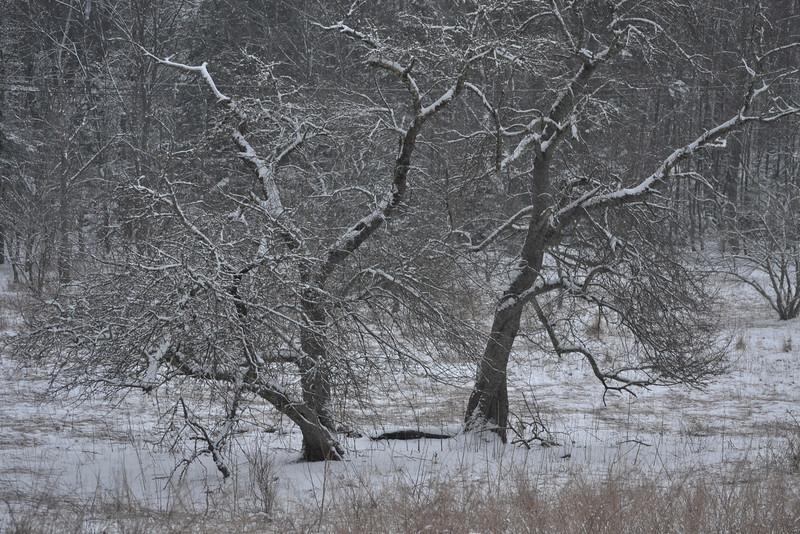 Captivating Trees