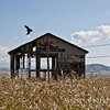 Raven, Barn, and Barbed Wire