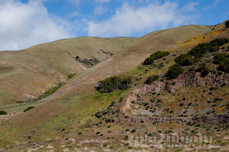 Hillside around Gorman, California