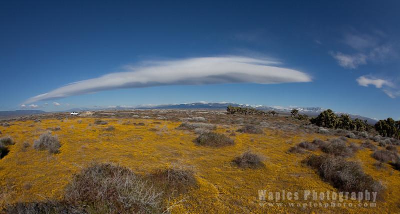 Cloud, Goldenfield, Scrub
