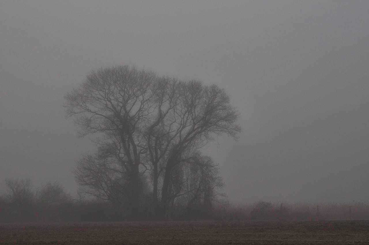 Tree in the Fog at Wickham's Fruit Farm where I worked for several years growing up.  Cutchogue, NY